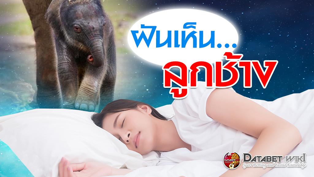 ฝันเห็นลูกช้าง