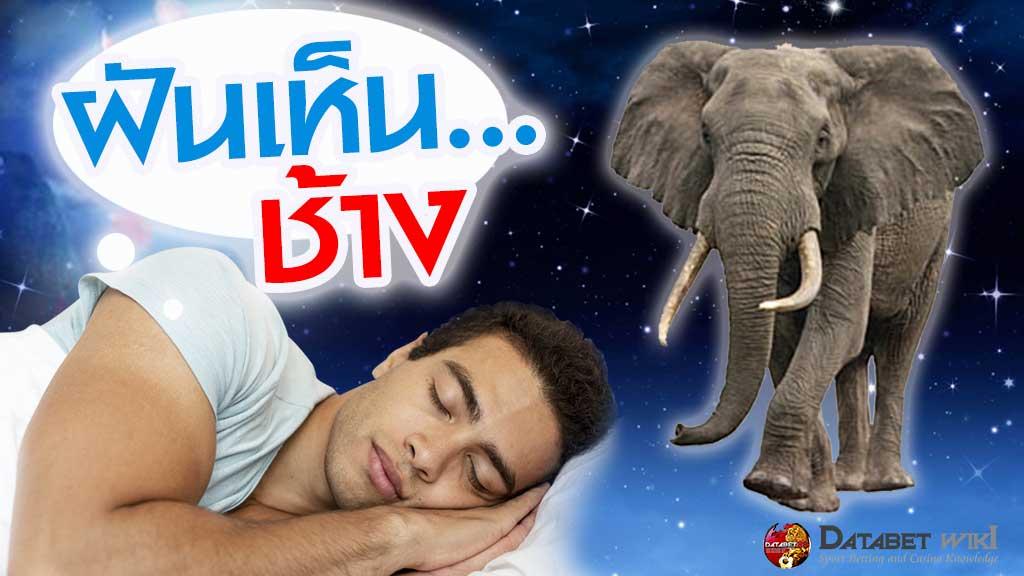 ฝันเห็นช้าง
