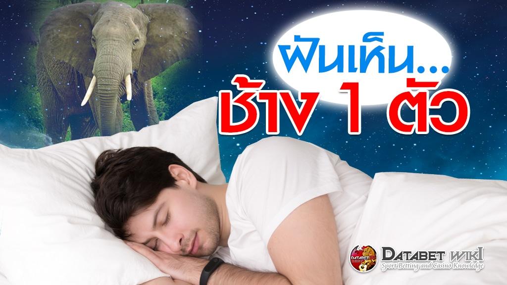 ฝันเห็นช้าง1ตัว