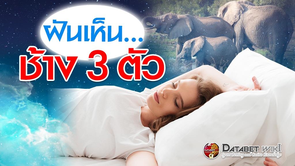ฝันเห็นช้าง3ตัว
