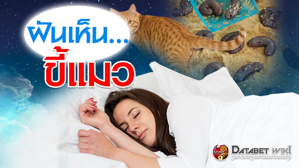 ฝันเห็นขี้แมว