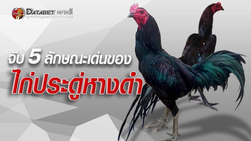 ไก่ประดู่หางดำ