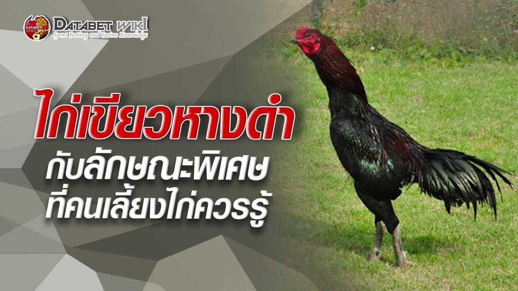 ไก่เขียวหางดำ