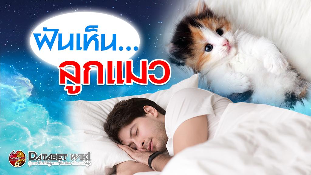 ฝันเห็นลูกแมว