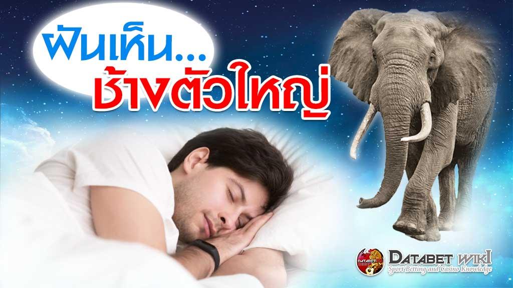 ฝันเห็นช้างตัวใหญ่