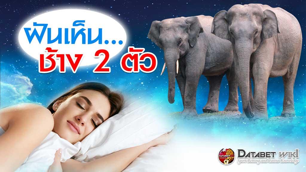 ฝันเห็นช้าง 2 ตัว