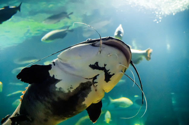ฝันเห็นปลาดุกหมายถึง