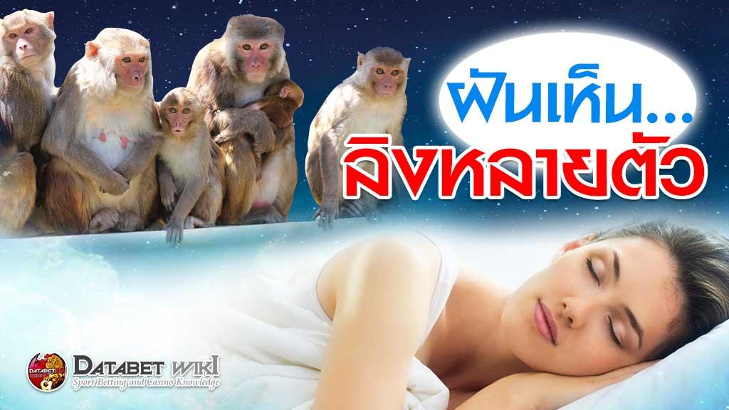 ฝันเห็นลิงหลายตัว