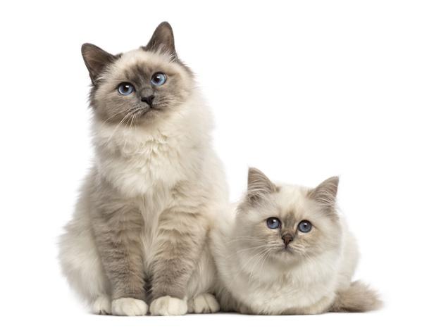 ฝันเห็นแมวหลายตัว