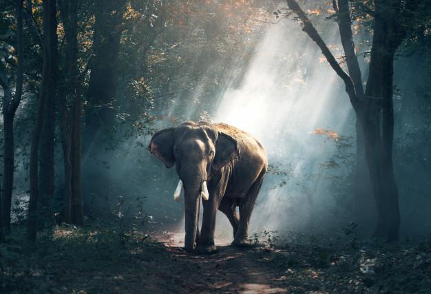 ฝันว่าวิ่งหนีช้าง