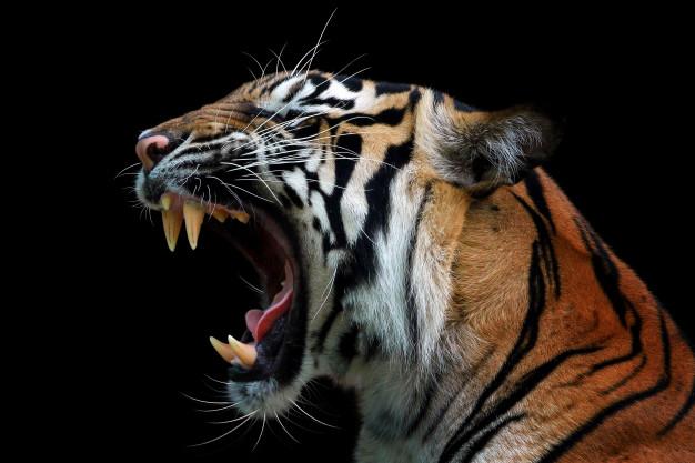ฝันเห็นเสือ