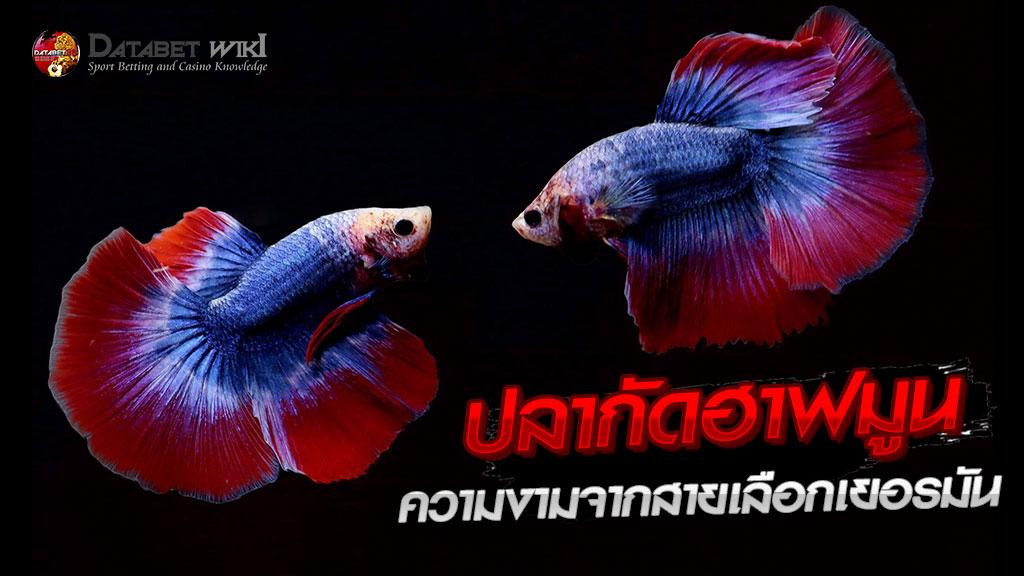 ปลากัดฮาฟมูน