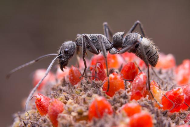 black ant flower 1150 7957